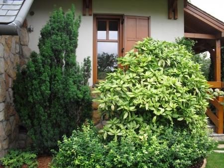 Örökzöldek és lombhullató növények
