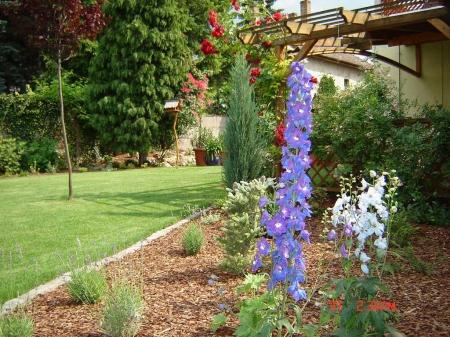 Növénytelepítés és a tévhitek